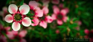 Pink and Green by leographics