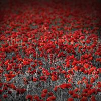 The Field of Red by ghiru