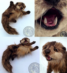 -SOLD- Hand Made Poseable Realistic Otter! by Wood-Splitter-Lee