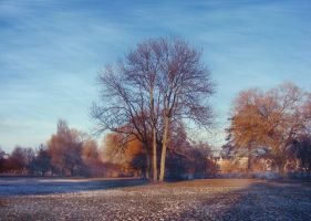cold winter day by rockmylife