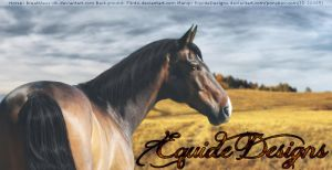 Golden Fields by EquideDesigns