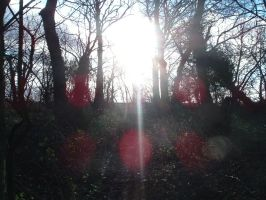 Copse stock 3 by RobynSmaleBeorg