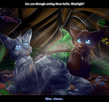 Jayfeather and Briarlight (Warrior Cats) by WarriorCat3042