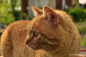 Profile Cat II by AppareilPhotoGarcon
