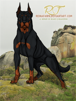 Beauceron 2015 by reinafawn