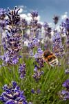 race behind a bee by jplale