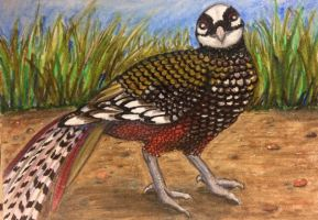 ACEO: Reeves Pheasant by DanielleMWilliams
