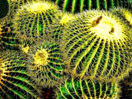 The Circle Cactus by RiegersArtistry