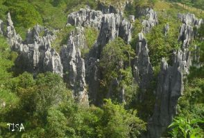 LIMESTONE FOREST by isabelle13280