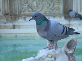 Pigeons of Sienna No. 6 by Dragonmum