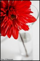 Flower on white background by katievphotography