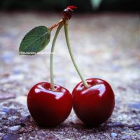 cherry cherry by illusionality