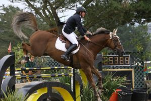 Liver Chesnut Warmblood Show Jumping Pebble Beach by HorseStockPhotos