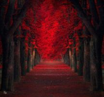 Red Maple tree forest by TempestKnightingale