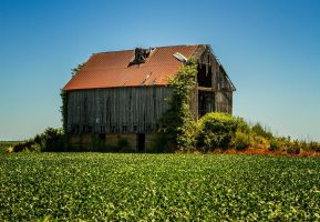 Old wooden barn near the Ohio River by boron