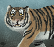 Siberian Tiger by Nioell