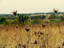 Prairie by caitlinwithasea