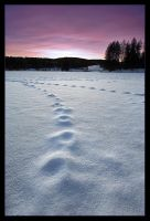 I Walk The Line by Fishermang