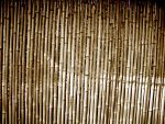 bamboo_texture_stock_001 by hookywooky