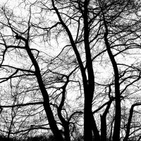 dancing branches by augenweide