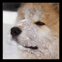 Snow dog by Aville