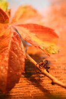 Autumn Grace by SharPhotography