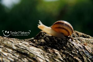 Snail by SmileMakers