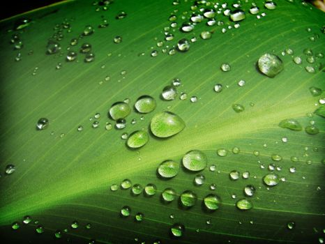 drops on green WP by MarcosRodriguez