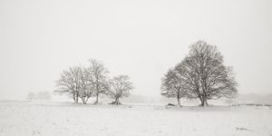 Snowy trees III by ThierryV