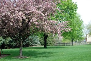 Spring trees by MNgreen