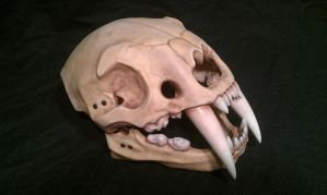 Sabre tooth tiger skull helmet by DragonArmoury