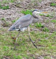 Heron2 by misducky