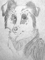 Border collie sketch by Ratshed