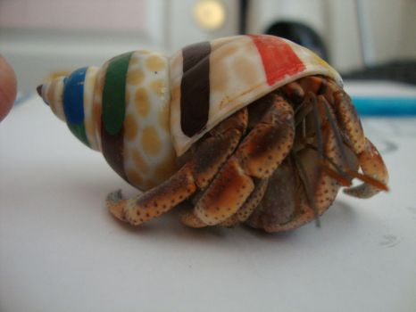 Rainbow hermit crab by WeAteTheCrayons