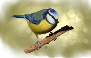 Blue tit by joscat
