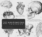 Anatomical textures by mellowmint