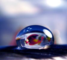 Just keep Swimming by Birthstone