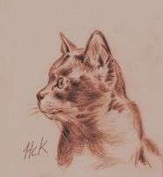 Pencilsketch Cat by artist2point5