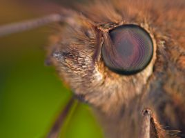Moth eye close up by otas32
