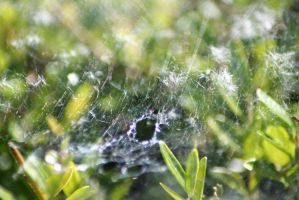 Hole in the Web by tammyins