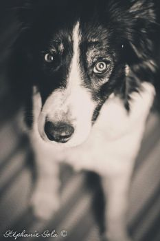 Hever border collie by fanny3001