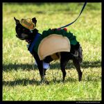 A Taste Of Mexico by In-the-picture