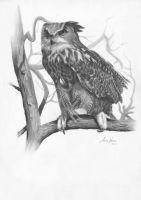 Eurasian Eagle Owl by Captured-In-Pencil