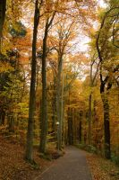 autumn 2015 3 by fot-ciosek
