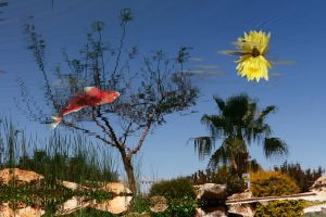 Tree Fish and Sun by ahermin
