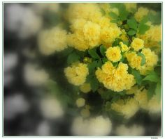 Golden Flowers by greenday-ra