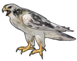 Peregrine Falcon Companion - Piebald by TokoTime