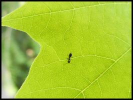 Ant on a Leaf by BJM121