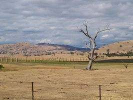 Countryside Victoria by natosaurus