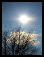 Late Fall Sun with Tree by lehPhotography
